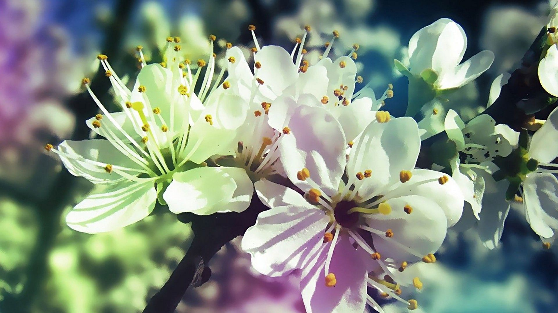 PC Wallpaper Spring Flowers Best HD Wallpapers Wallpaperscute 1920x1080
