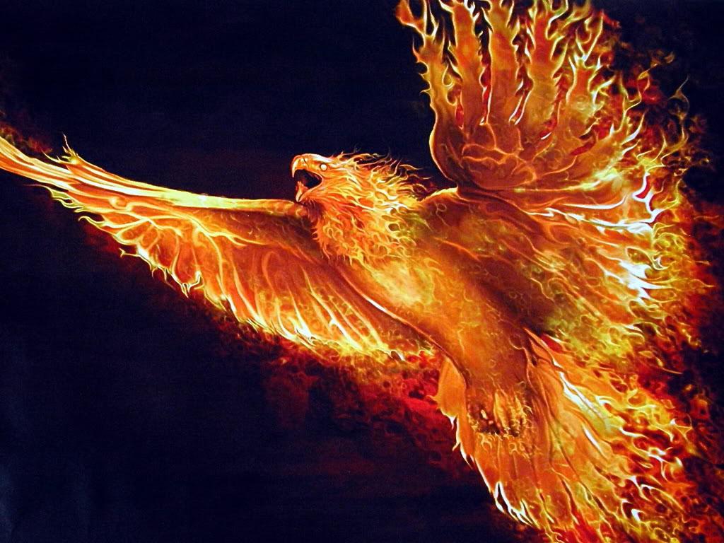 Phoenix Bird 14 Hd Wallpaper   Hivewallpapercom 1024x768
