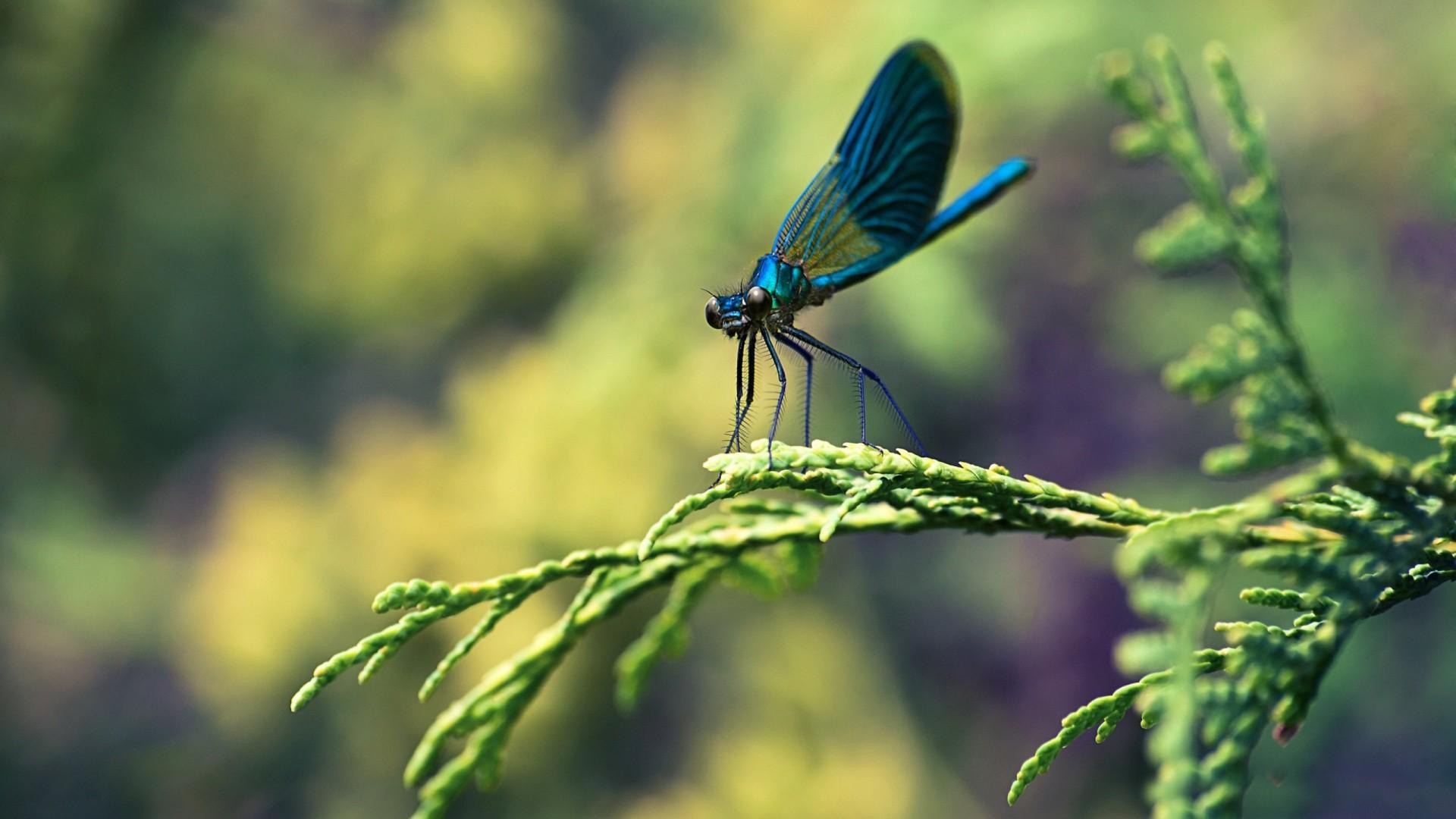 Blue Dragonfly Macro Wallpaper   New HD Wallpapers 1920x1080