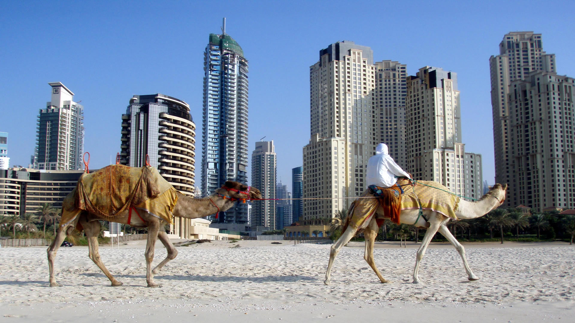 united arab emirates and camels HD Windows Wallpapers 1920x1080