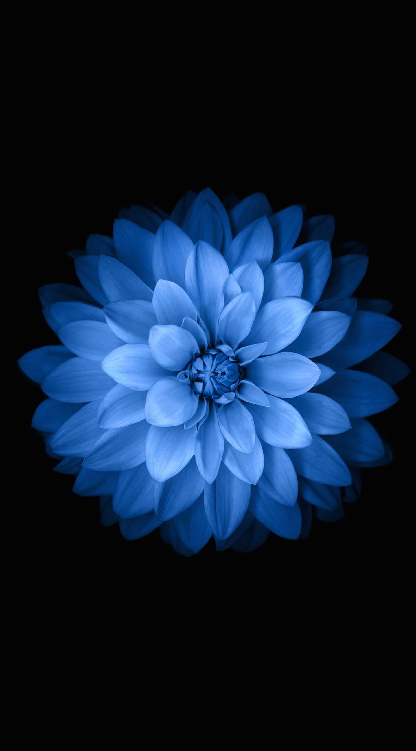 Blue black flower wallpapersc iPhone6Plus 1438x2592