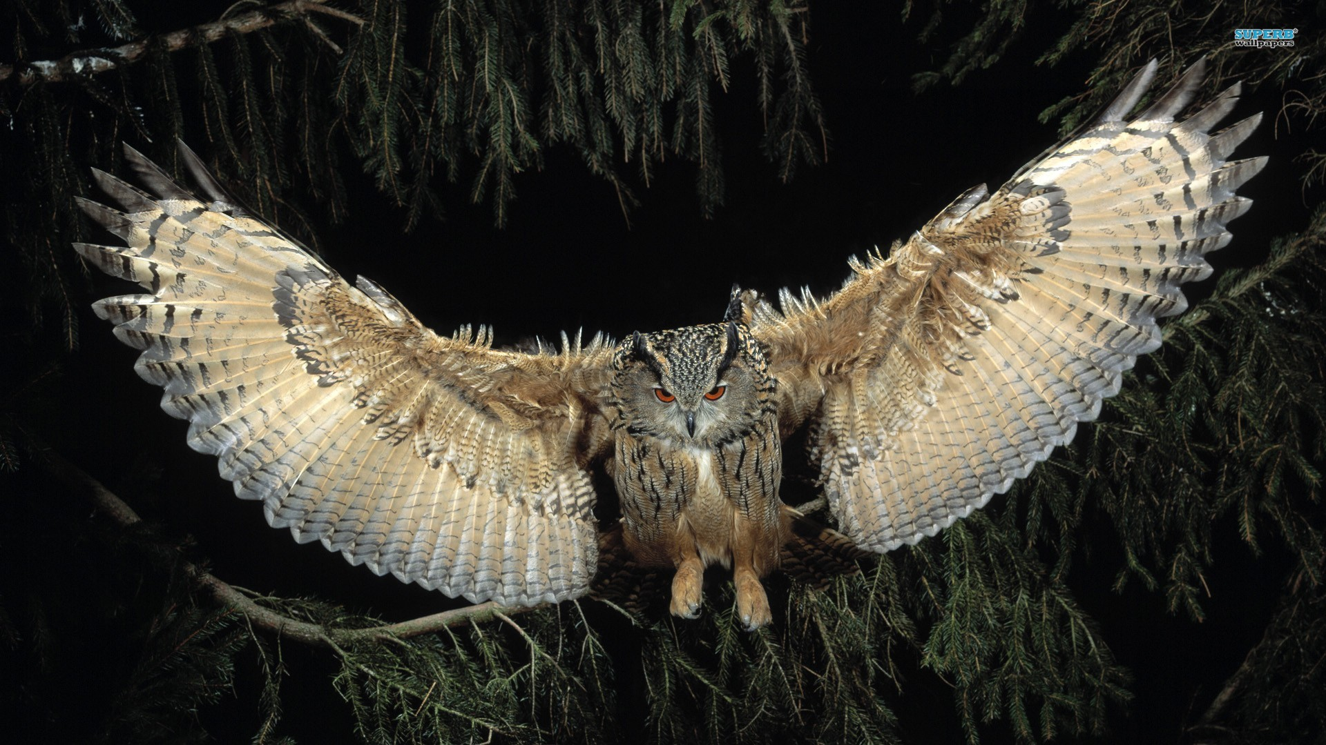 Flying Owl Exclusive HD Wallpapers 4157 1920x1080