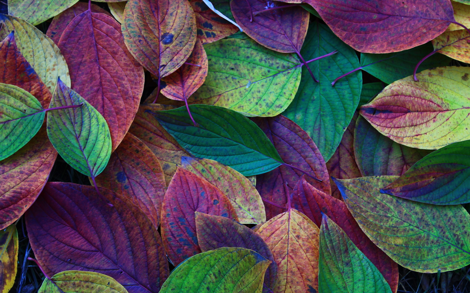 Fall Leaves Desktop Wallpaper 1920x1200