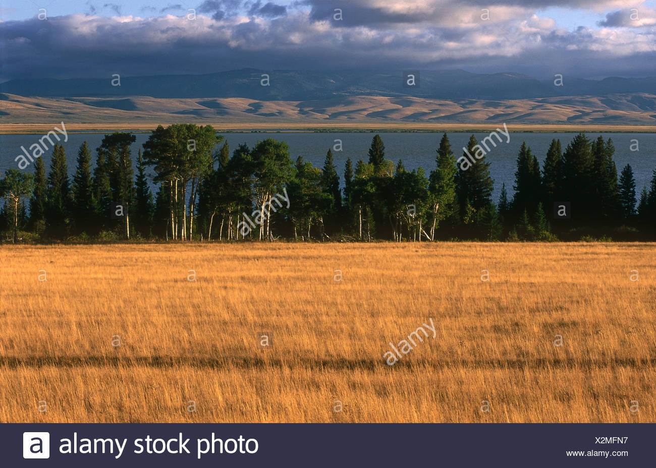 Grassy field with lake in background Red Rock Lake Centennial 1300x928