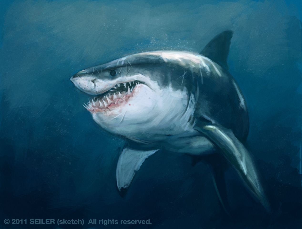 cute great white shark - photo #22