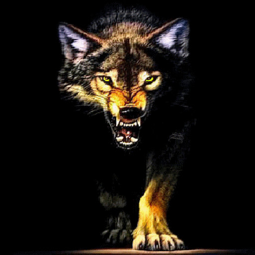 Wolf Wallpaper for Android - WallpaperSafari