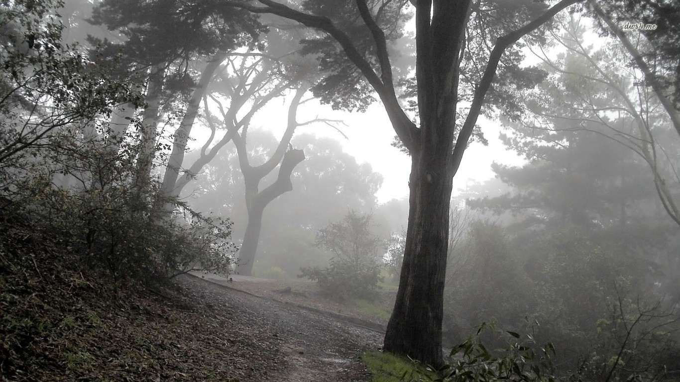 Pin Trees And Fog Wallpaper 1366x768 1440x900 1366x768