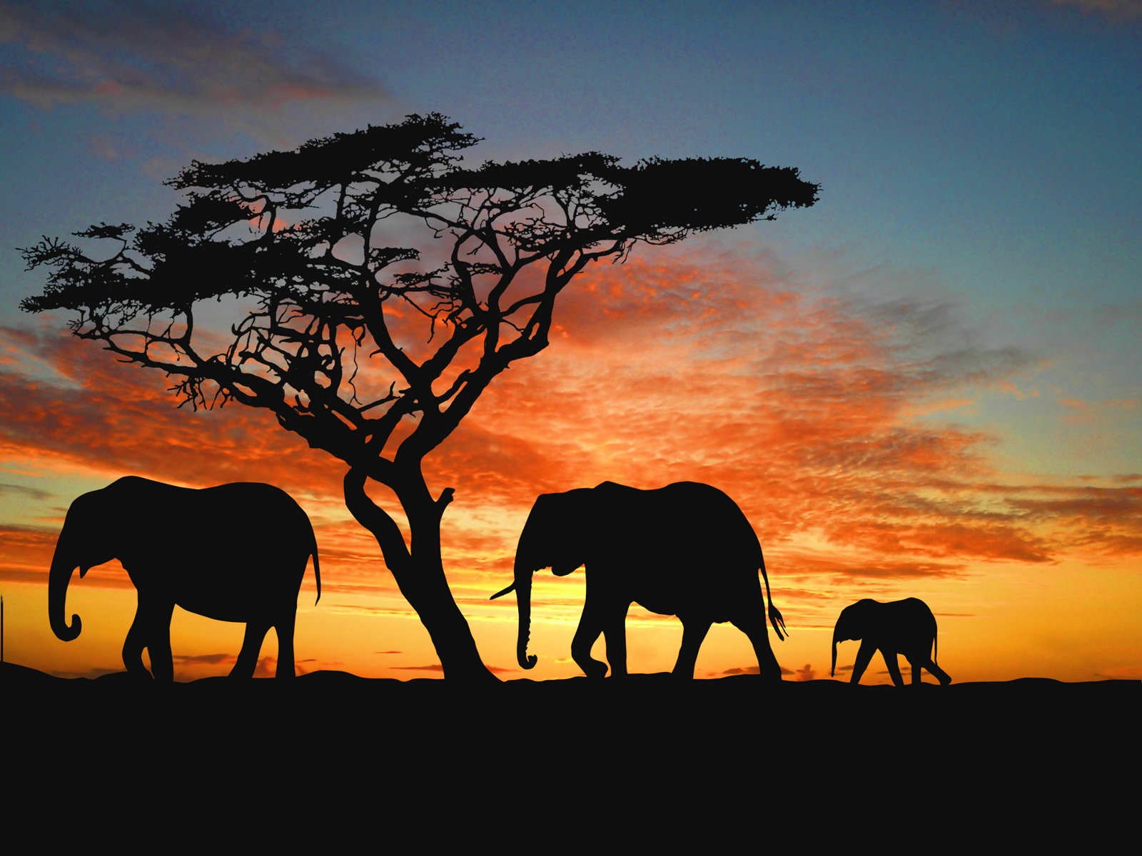 Free Download Family Of African Elephants Wallpaper Super Hd