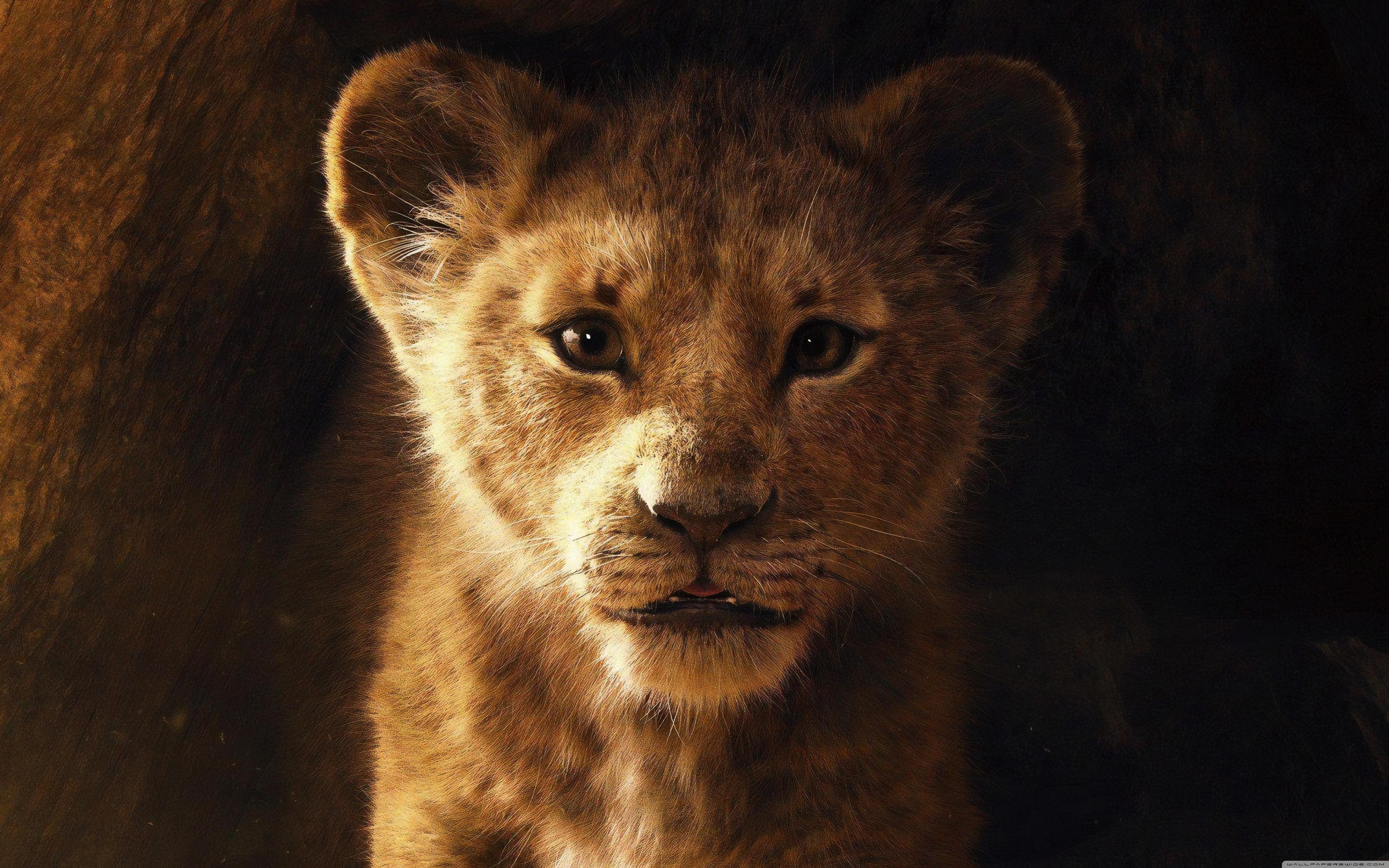 The Lion King 2019 5K 4K HD Desktop Wallpaper for 4K Ultra HD 5120x3200