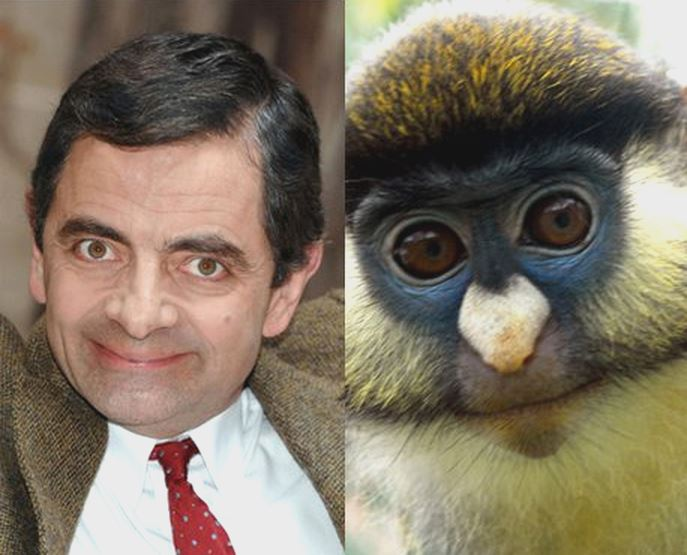 34 Best celebrity look alikes images | Celebrity look ...