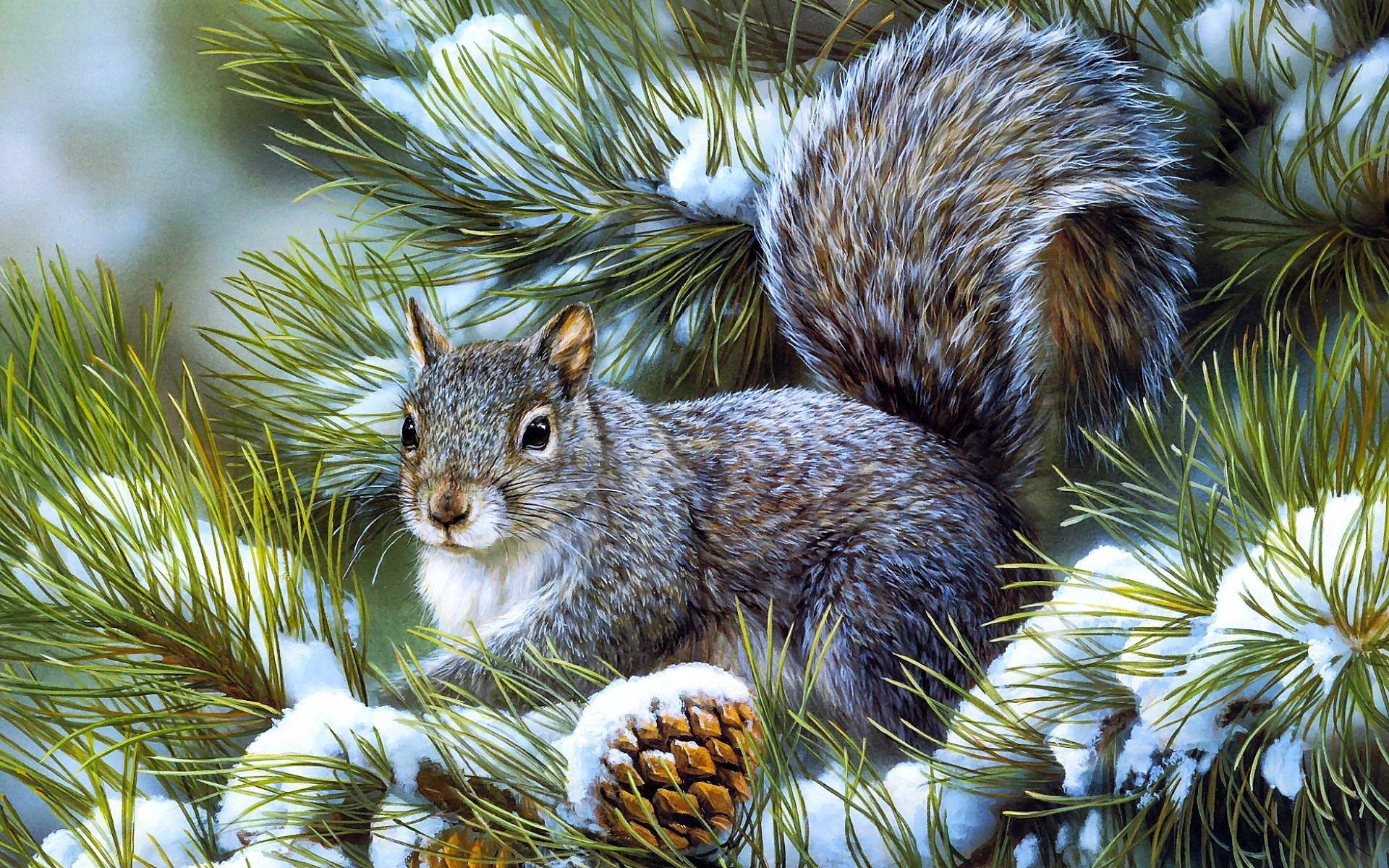 Squirrels animals rodents art artistic nature wildlife winter snow 1920x1200