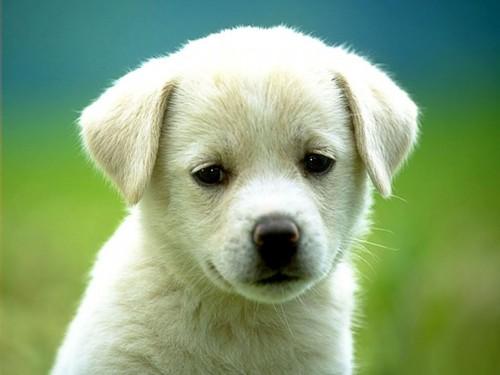 dog screensaver puppy 500x375