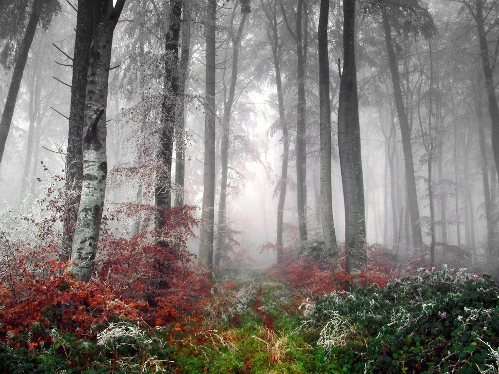 Foggy Forest Backgrounds wallpaper Foggy Forest Backgrounds hd 1024x768