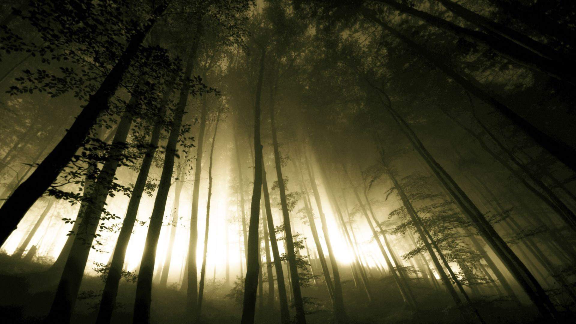 dark forest wallpapers wallpapersafari