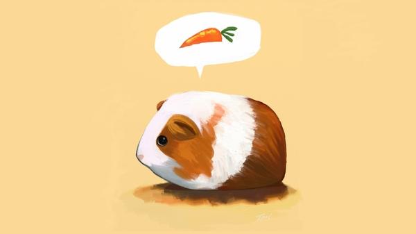 guinea pigs guinea pig 1920x1080 wallpaper Cartoons Wallpaper 600x337