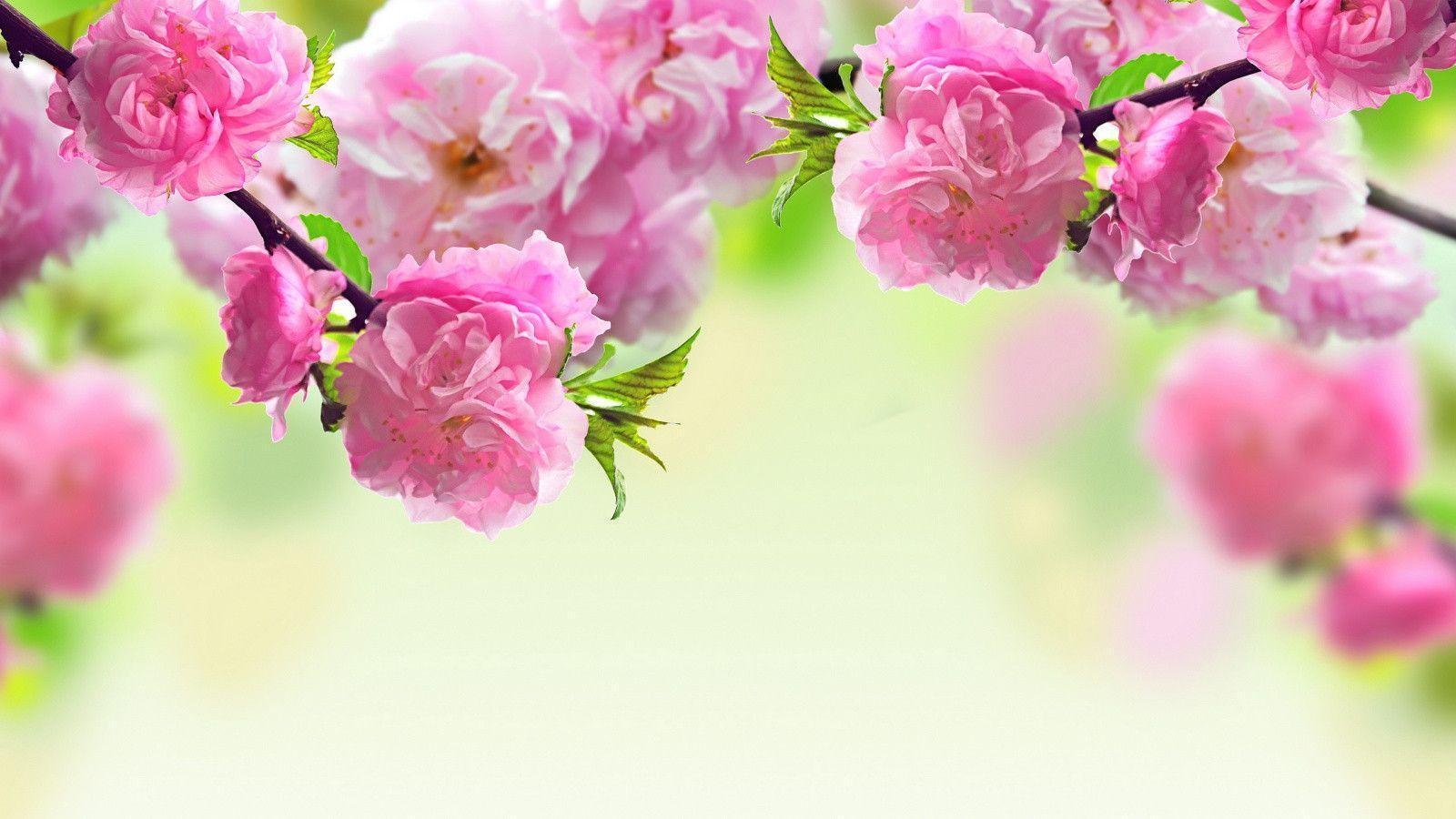 Spring Desktop Wallpapers   Top Spring Desktop Backgrounds 1600x900