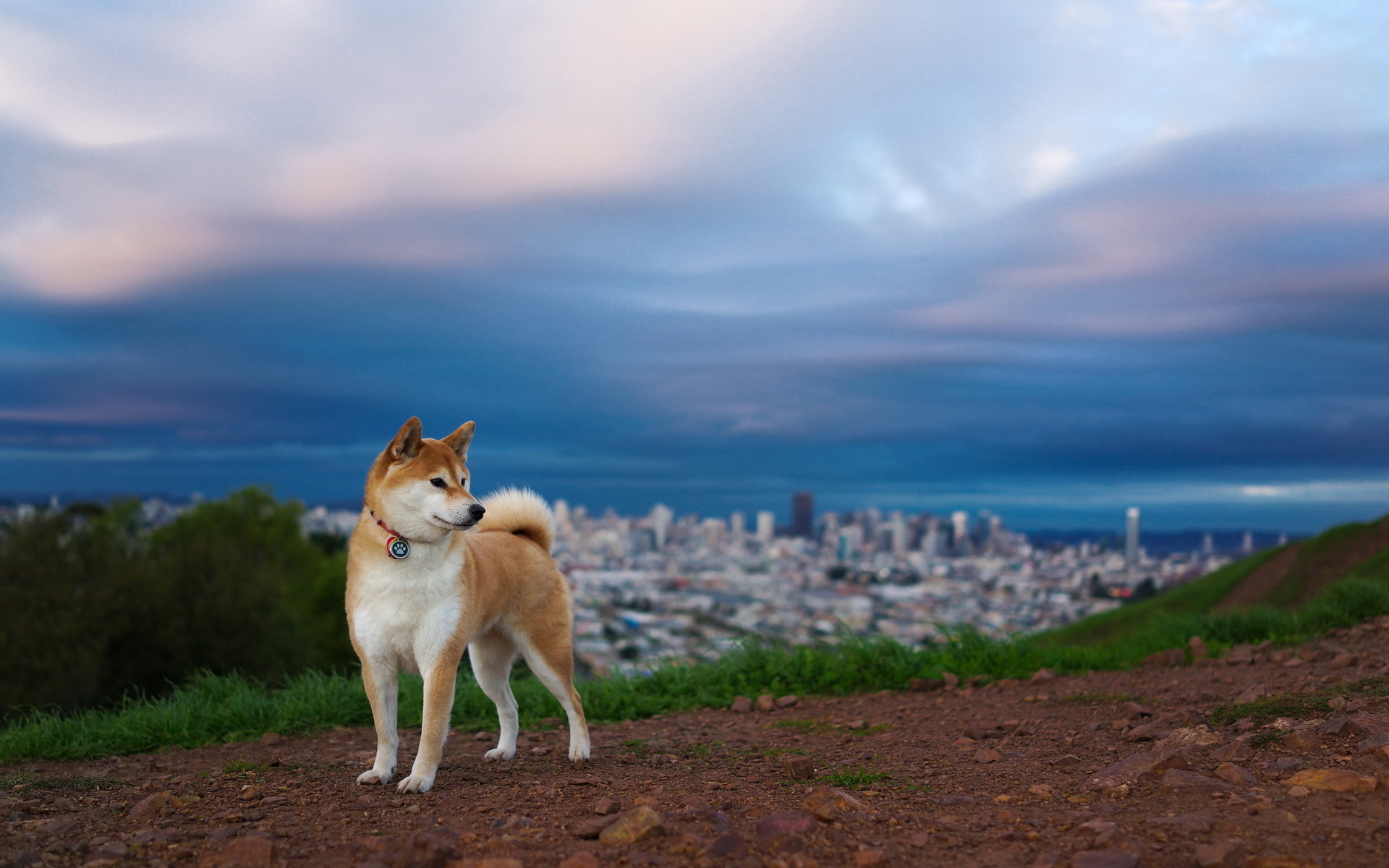 собака животное природа  № 690816 без смс