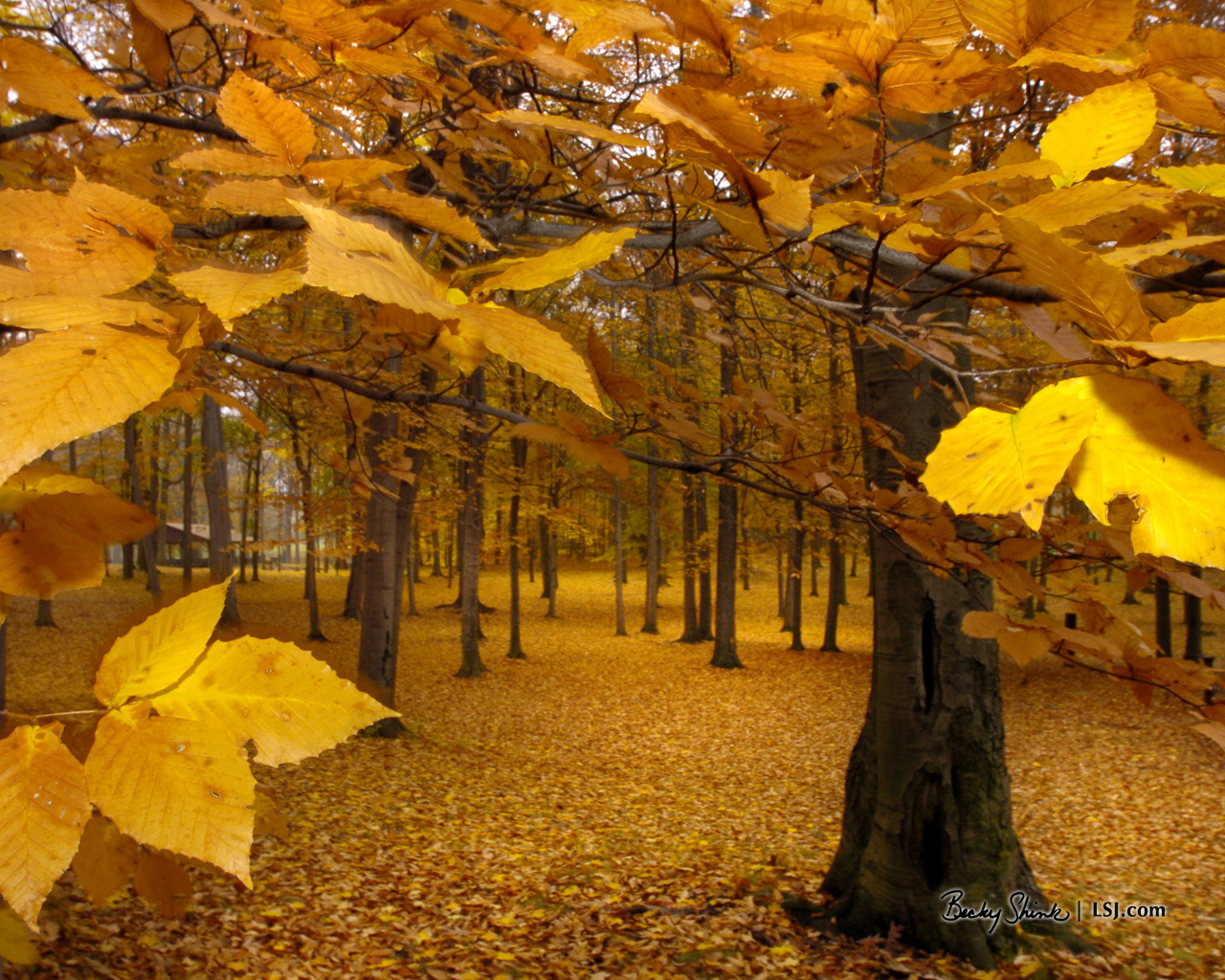 Yellow Leaves   Autumn Wallpaper 393324 1280x1024