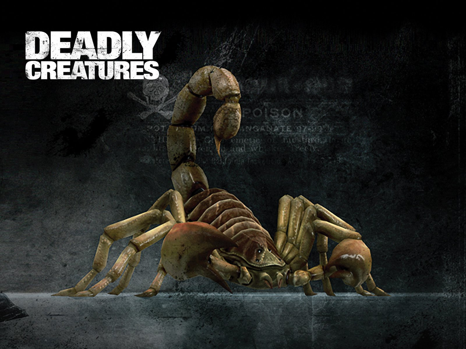 scorpion deadly creatures wallpaper scorpion wallpaper scorpionjpg 1600x1200