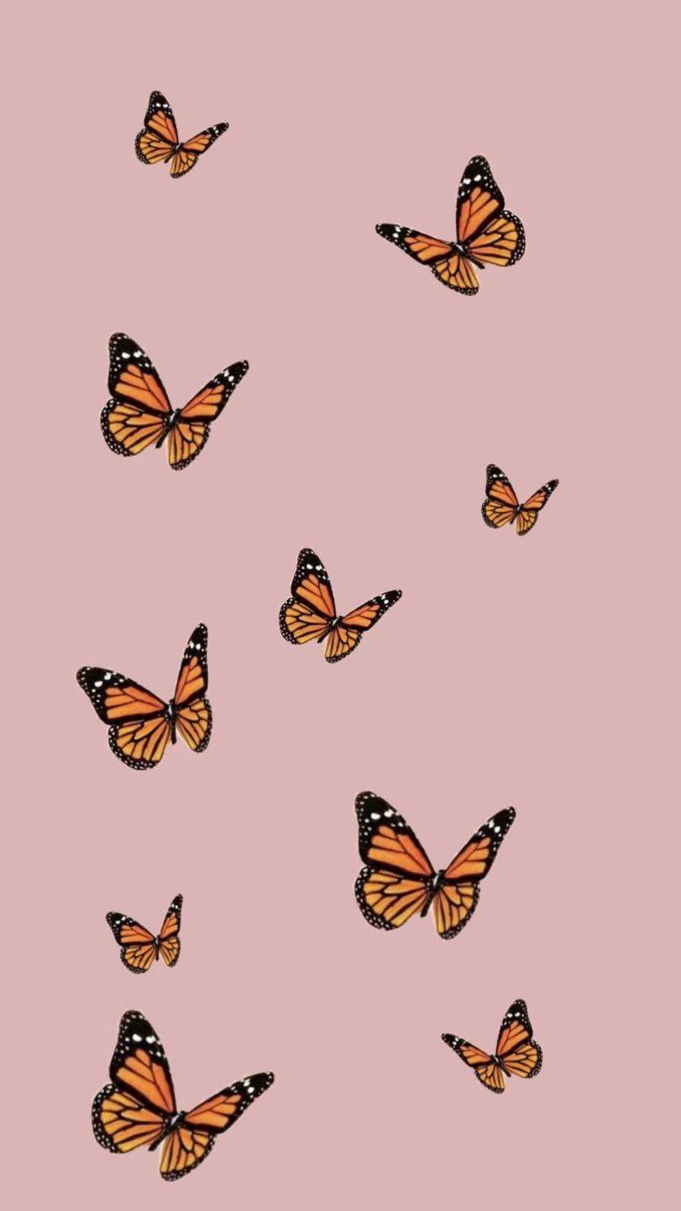 32 Soft Girl Aesthetic Wallpapers On Wallpapersafari