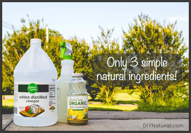 Natural Homemade Wallpaper Remover and How To Use It 660x461