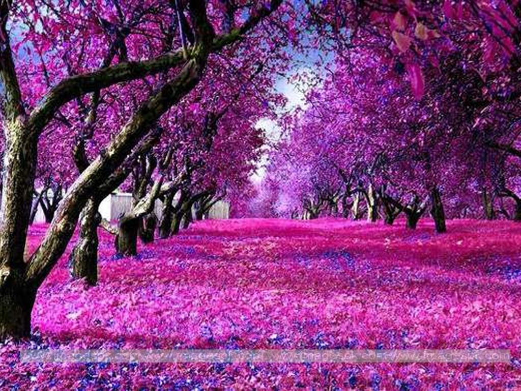 Purple Nature Wallpaper - WallpaperSafari