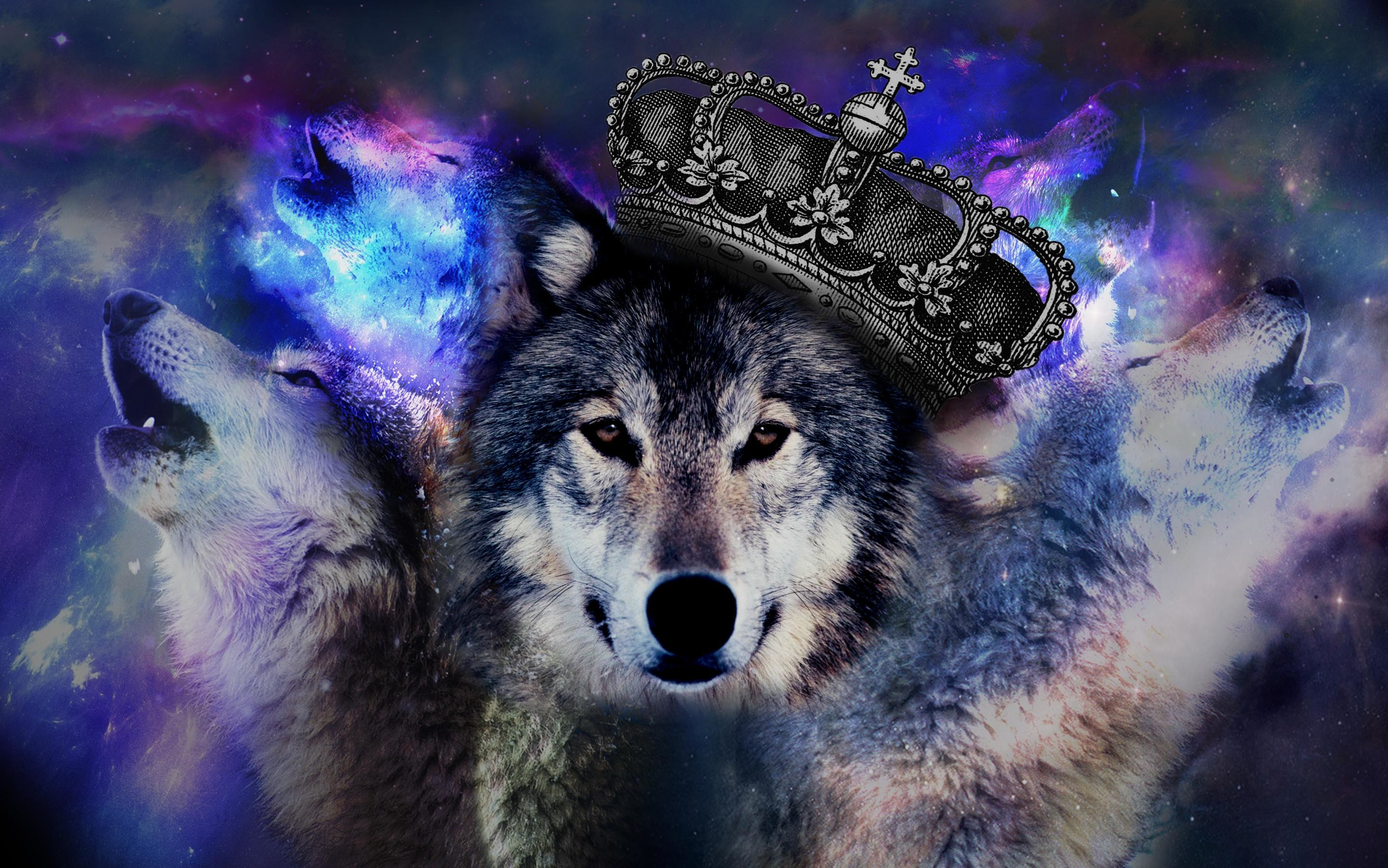 Trippy Wolf Wallpapers 66 images 2880x1800