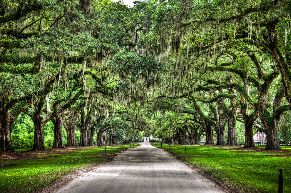 It is lined by about 90 oaks with spanish moss South Carolinajpg 990x656