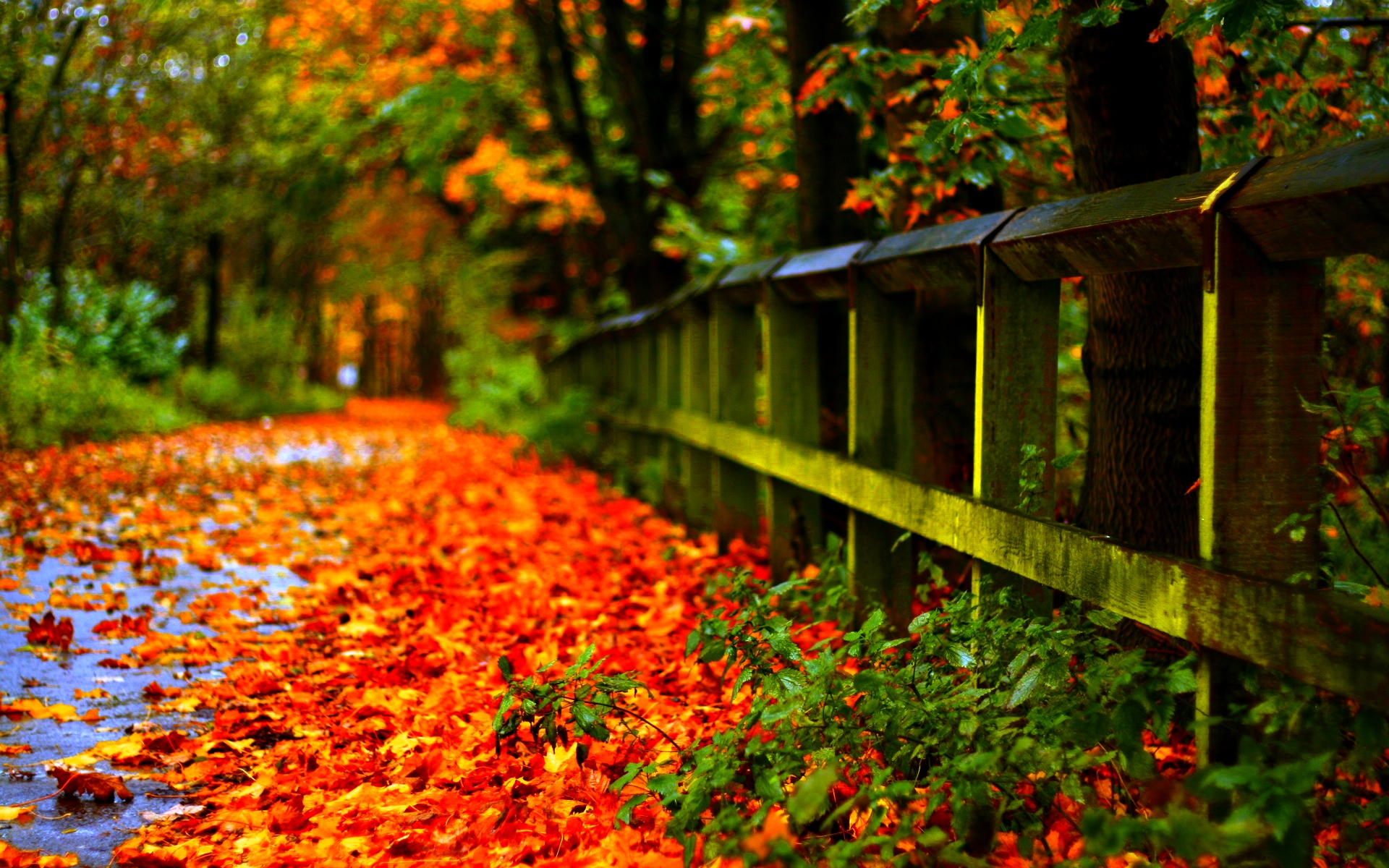 Autumn Leaf 1920x1200