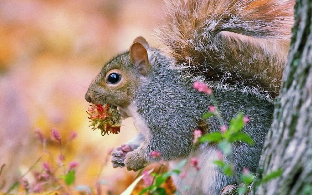 Funny Squirrel Animals Wallpaper Wallpapers Gallery 1280x800