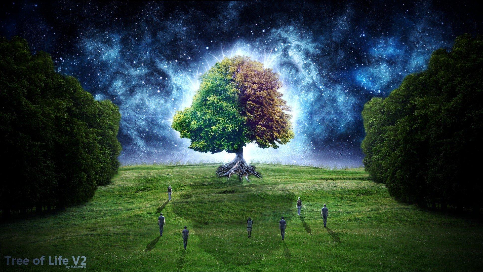 digital art Tree Of Life Starry Night Fantastic wallpaper background 1920x1080