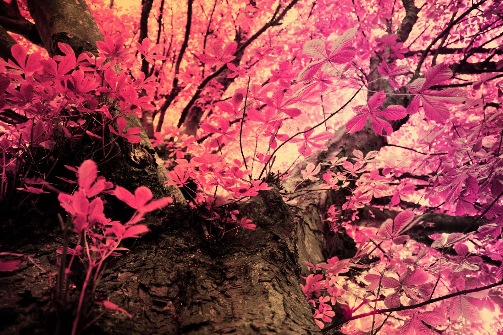 Pink Mossy Oak Wallpaper WallpaperSafari