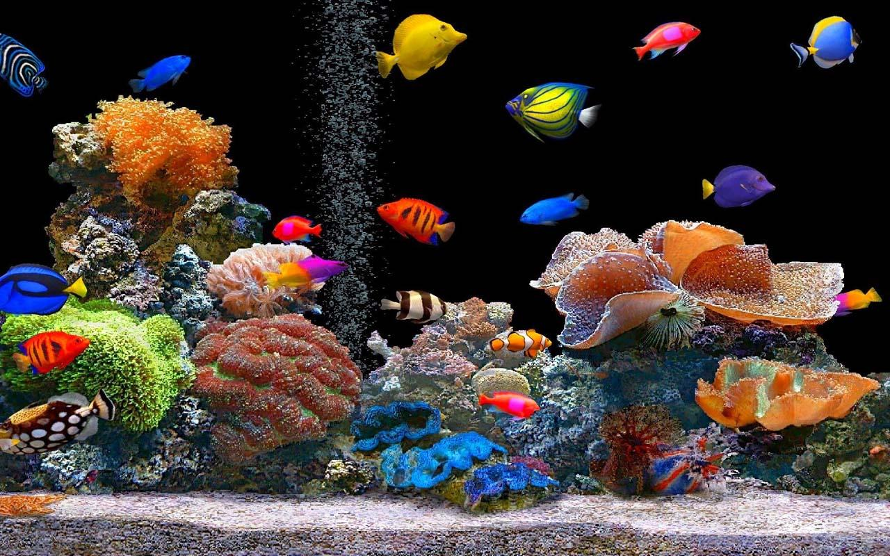 Fish aquarium live wallpaper - Real Aquarium Live Wallpaper For Android Real Aquarium Live Wallpaper