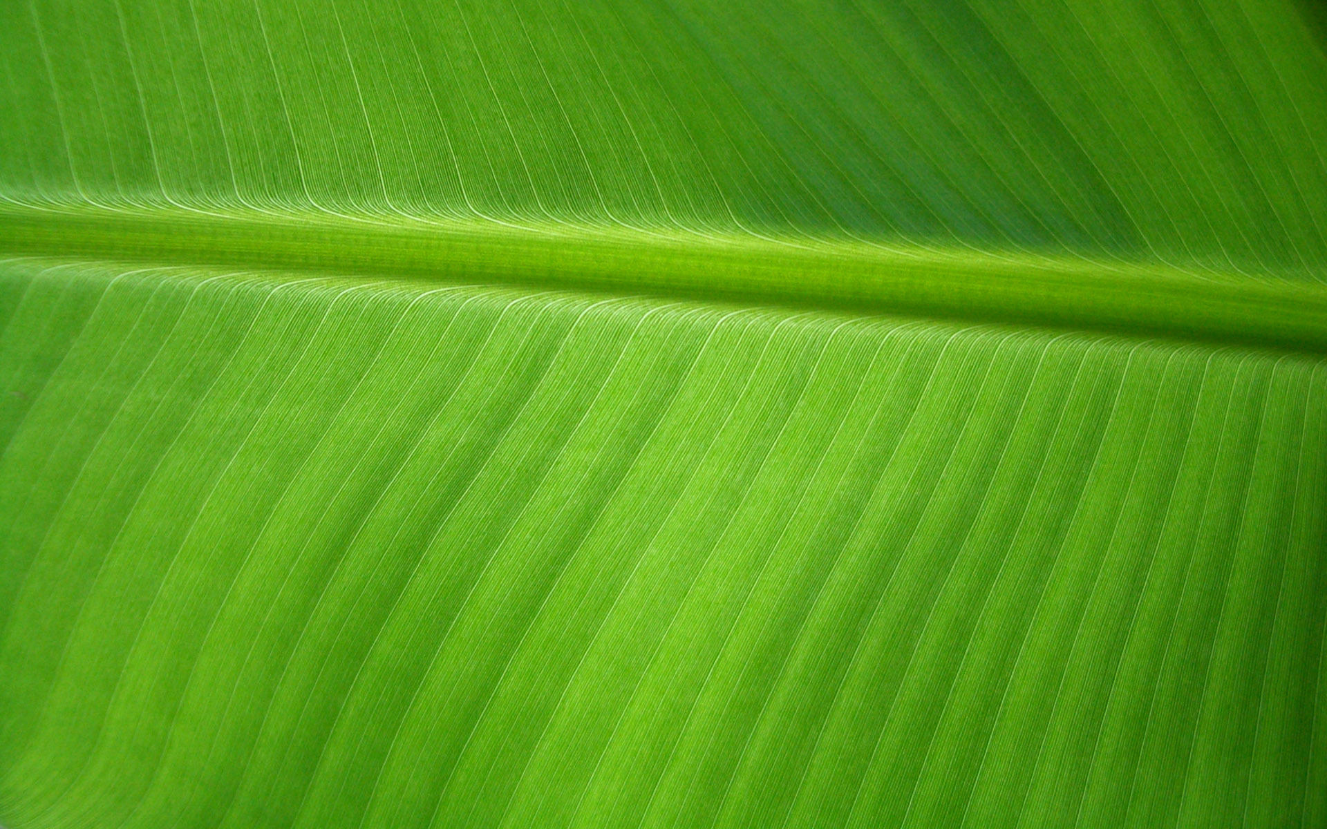 Banana Leaf by OrodrethC 1920x1200