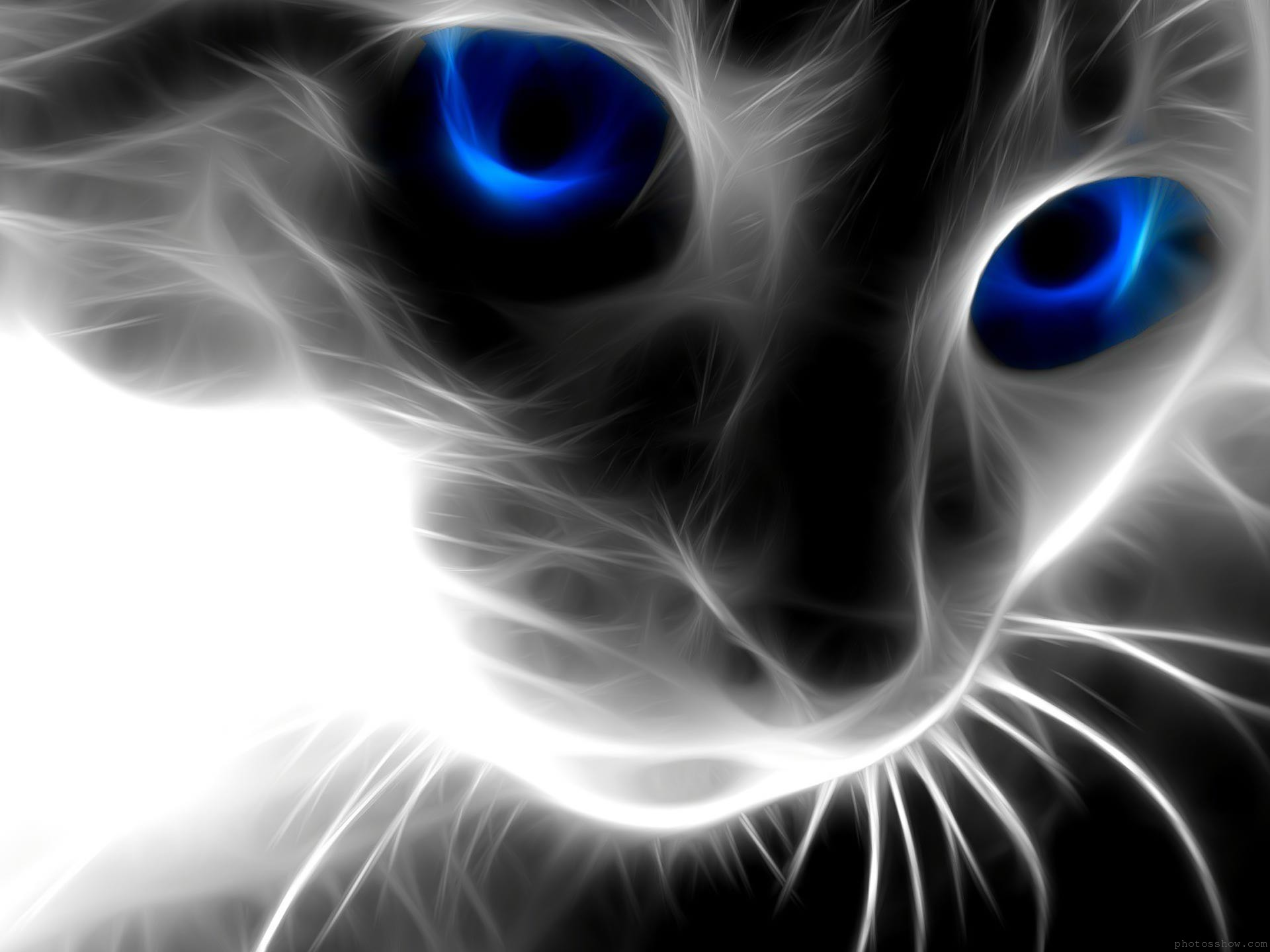 Download Black Cat Blue Eyes Wallpaper 1920x1440 Full HD Wallpapers 1920x1440