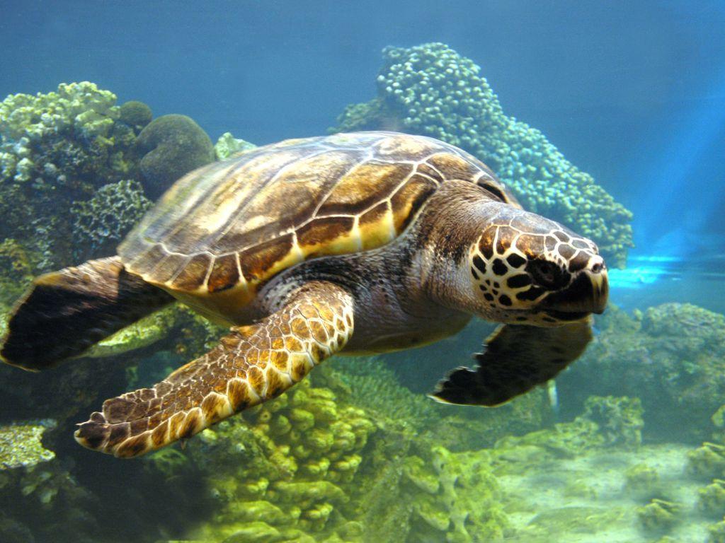 Sea Life   Sea Life Wallpaper 32310947 1024x768