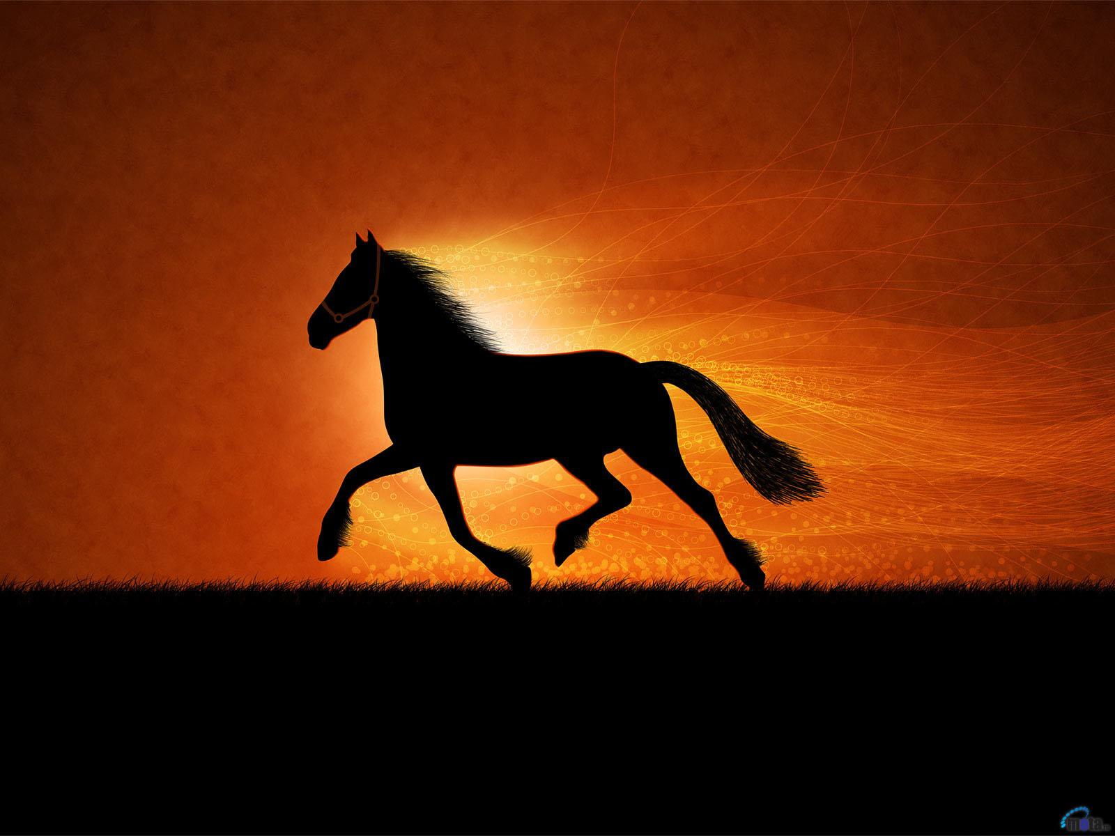 Free Download 3d Horse Wallpaper 3d Wallpaper Box 1600x1200 For