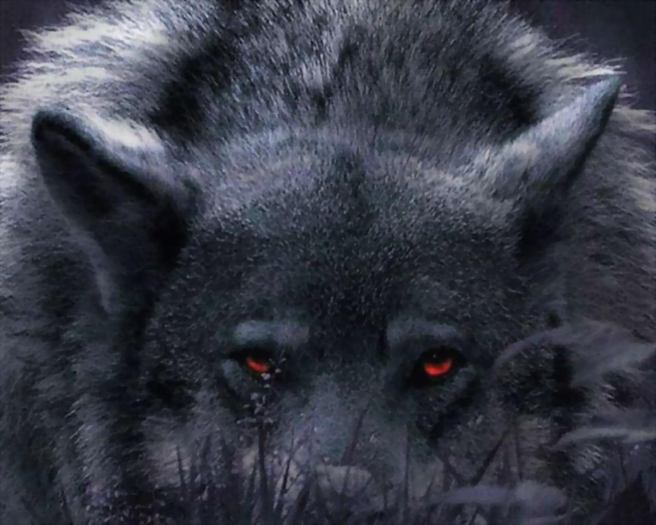 Wolf Wallpapers Hintergrnde 1280x1024 ID171733 1280x1024