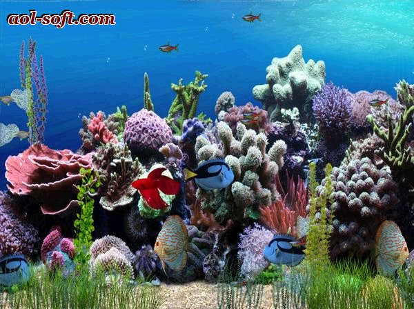 Free animated aquarium desktop wallpaper wallpapersafari for Fond ecran gratuit aquarium