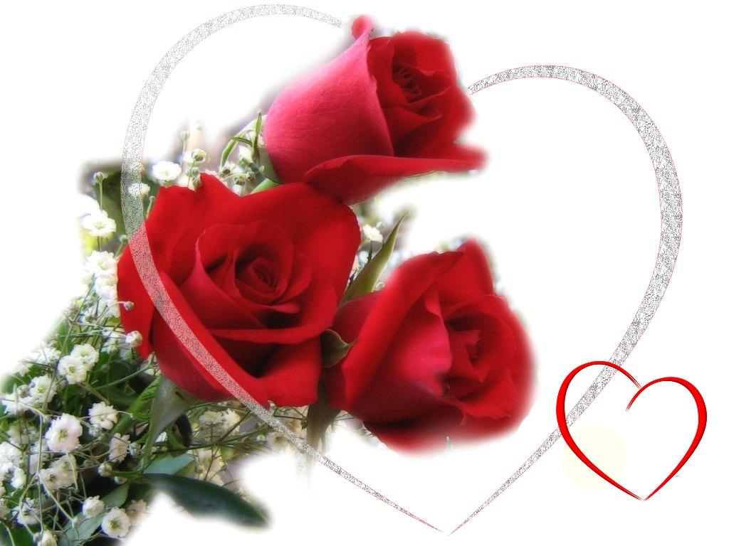 Lovely Red Rose Flower Wallpaper Guitar