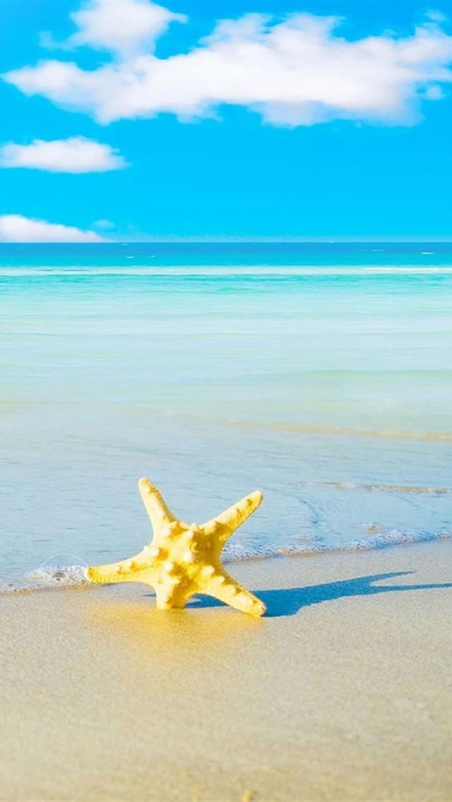 Starfish Beach iPhone 5 Wallpaper (640x1136)