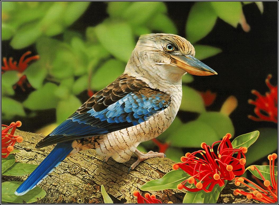 Beautiful birds Wallpaper 1054x775