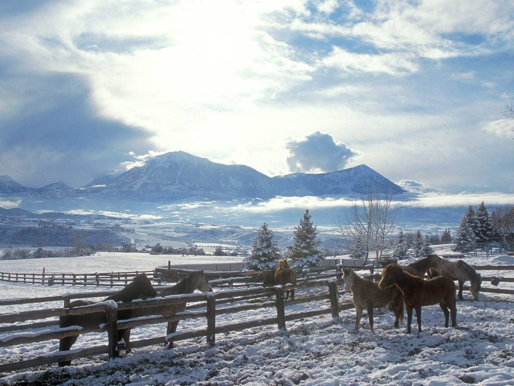Hd Background Wallpaper 800x600: Winter Horses Pictures Wallpaper