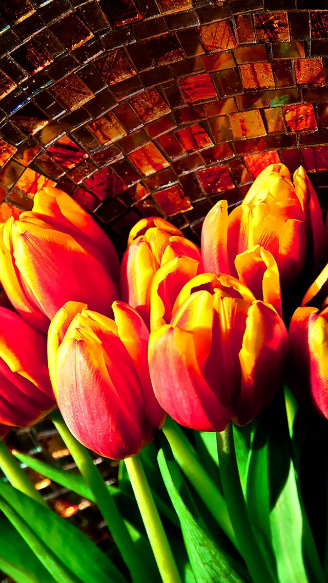 Wallpaper iPhone tulips Wallpapers Pinterest Tulip Wallpapers 640x1136