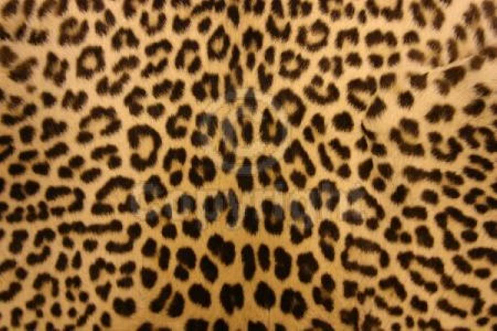 Zebra Print Desktop Wallpaper coolstyle wallpapers 1024x683