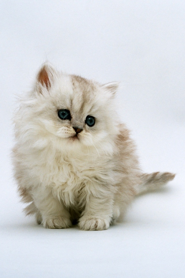 48 Cute Cat Iphone Wallpaper On Wallpapersafari