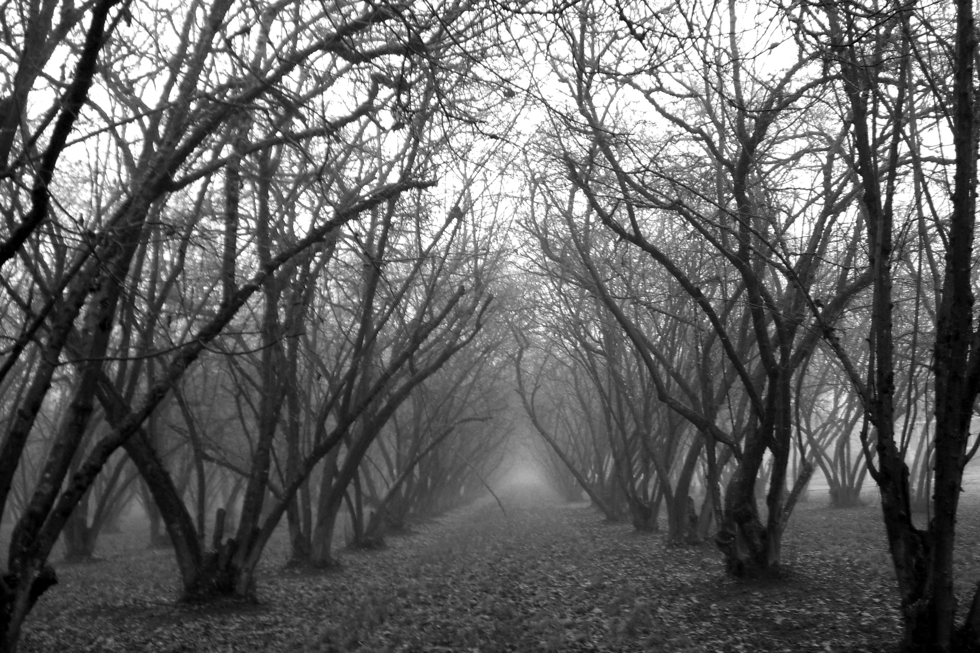 Foggy Grove black and white by nick91884   Desktop Wallpaper 3120x2080