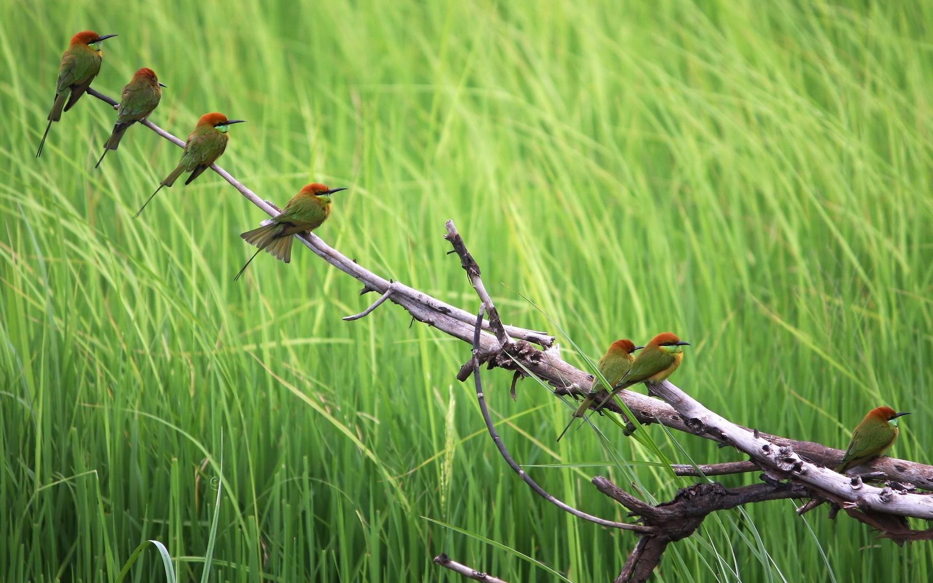wallpaper branch birds birdjpg 1920x1200