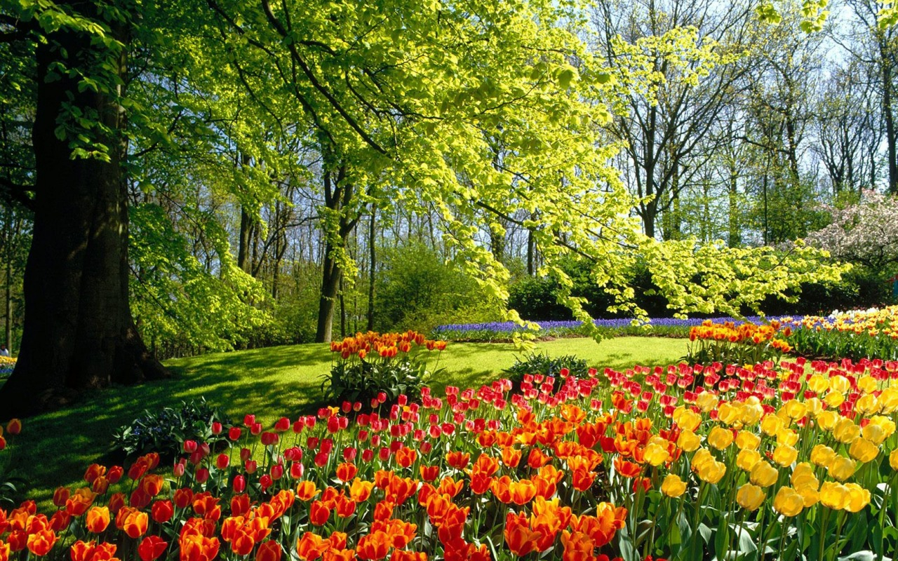backgrounds9spring park wallpaper spring nature wallpaper widescreen 1280x800