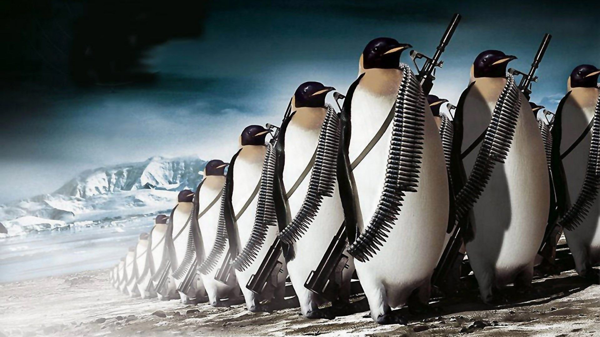 penguin photos wallpapers ololoshenka Full hd desktop 1920x1080